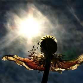 Tanec pro slunce