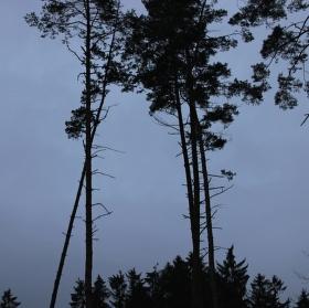 Stmívání v lese