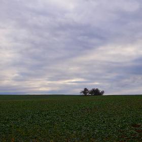Lednové pole