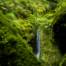 česká džungle