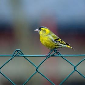 na plotě
