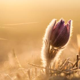 Jarní probuzení