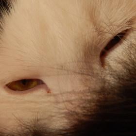 Kočičí pohled