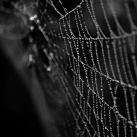 Pavoukův náhrdelník.....
