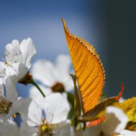 Jarní pozdrav