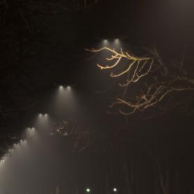 Noční alej v mlze