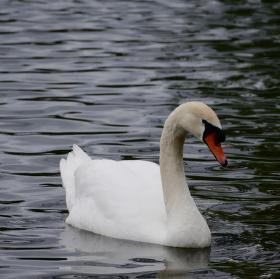 Strážce Hamerského rybníka