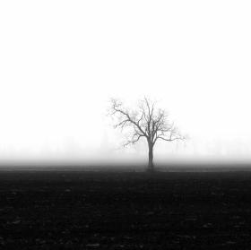 Strom v mlze