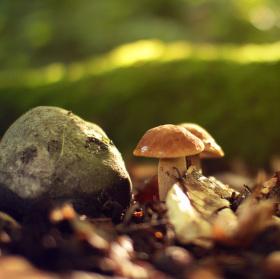 Lesní čas