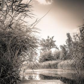 Staré molo u rybníka