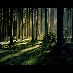 V chladném stínu temného lesa