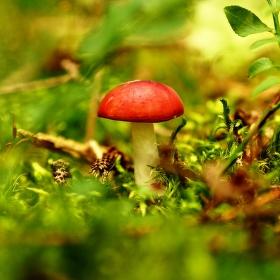 V červeném kloboučku