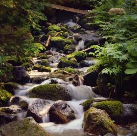 Potok ze slovenských hor