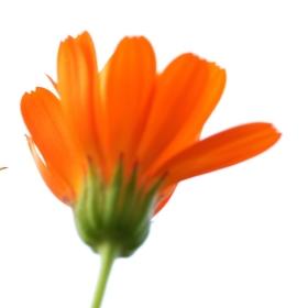 Jediný květináč