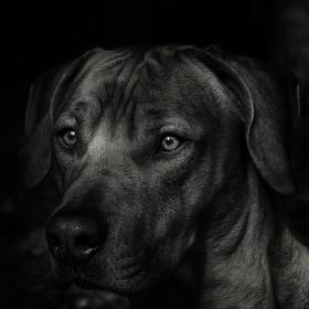 Portrét mého kamaráda
