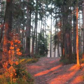 Barvy podzimu-dobré světlo.
