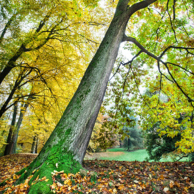 Podzim na Sychrově I