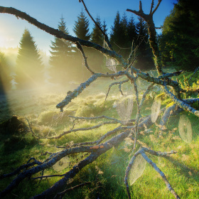 Šumava- Světlo v pavučině
