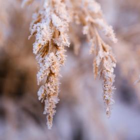 kouzlo zimy