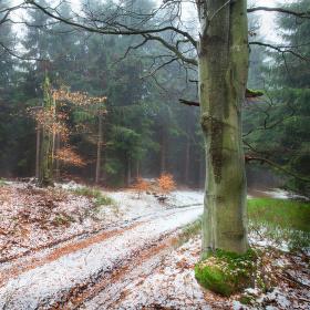 Zima nesměle přichází