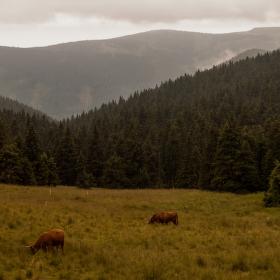 horské pastviny