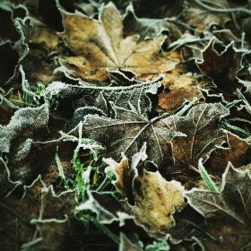 Klenot zimy