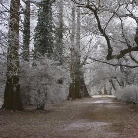 Mrazík v lednickém parku