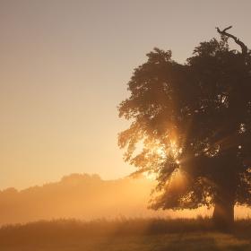 Schované za stromem