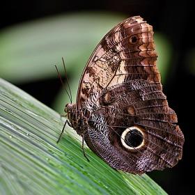 Motýlí ladnost