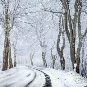 Zimní alej II
