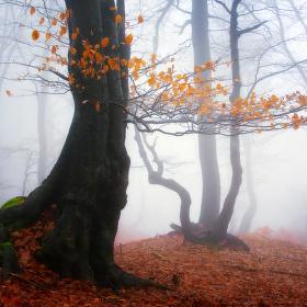...podzimní Bouřňák