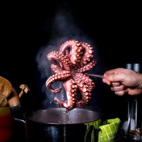chobotnice ...