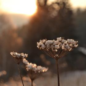 Zimní květiny