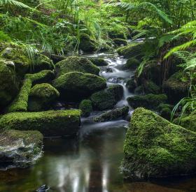 Kaskády potoka v lesích u Milov