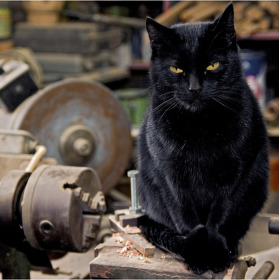 Dílenské zátiší s kočkou