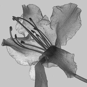Květ - fotografika
