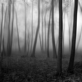 V ponurém lese