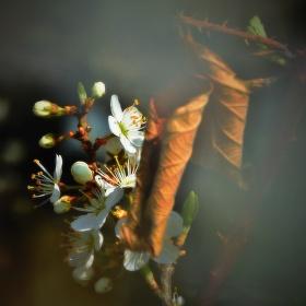 Probuzené jaro