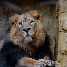 Král zvířat
