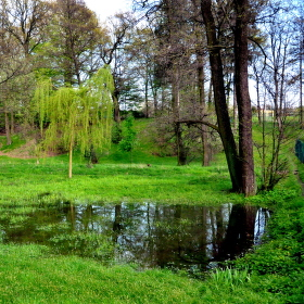 Stromy, tráva, voda...