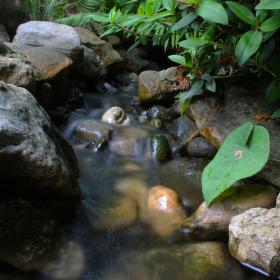 Česká džungle v Tróji