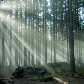 V lese nad Kašperskými Horami