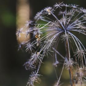 Suchý květ