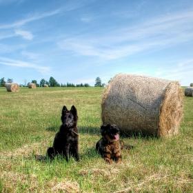 Léto v polích