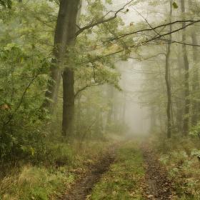 V kouzelném lese