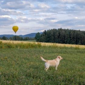 2 balony a pes