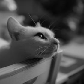 Dreamy Cat