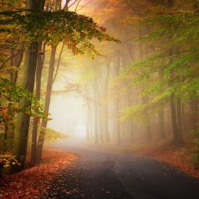 ...barvy podzimu II.