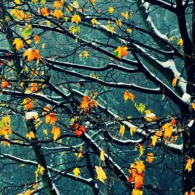 Ráno mezi podzimem a zimou