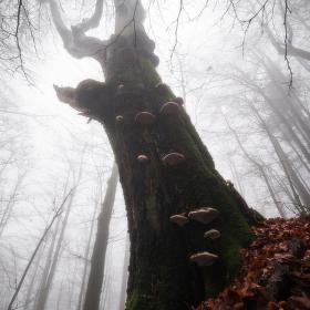 Bukový les v Mracích